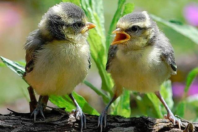 Offenburger Knastis basteln Nistkästen für die Vogelschützer
