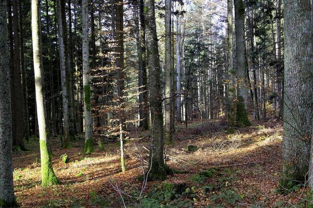 Letzte Ruhe finden im Wald?