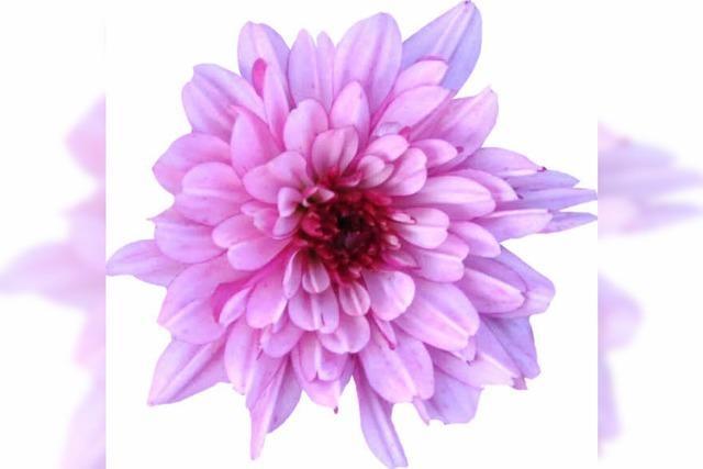 Blumen helfen Menschen