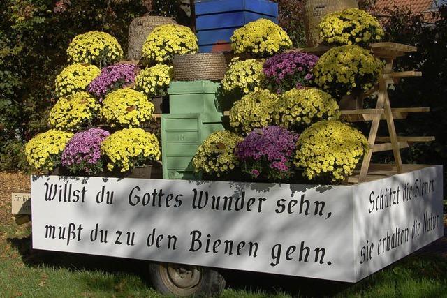 Ein bisschen Werbung auch fürs Bienenmuseum