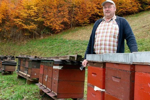 Warum Honig derzeit knapp und entsprechend teuer ist