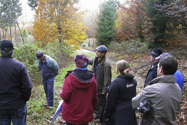 Unterwegs im feuchten Novemberwald