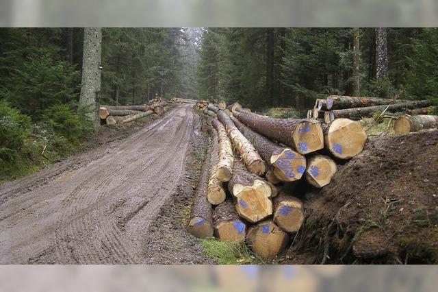 Wald wirft etwas mehr Gewinn ab