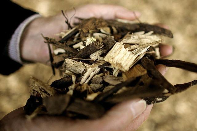 Bedarf nach Biowärme aus Holz steigt weiter