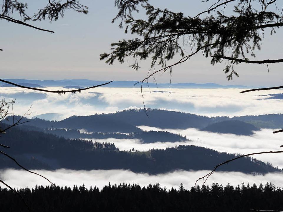 Blick von der Hornisgrinde in Richtung...alpark Nordschwarzwald entstehen kann.  | Foto: Peter Heck