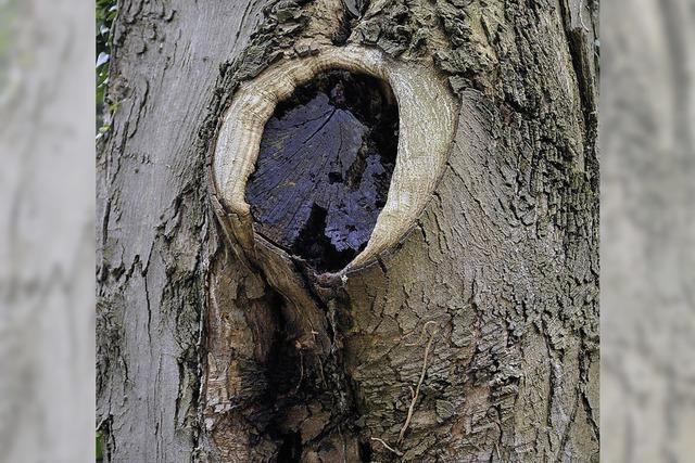 Einigen Bäumen droht die Axt