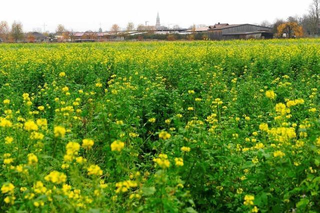 Freiburg auf Stadtteil-Suche: Rieselfeld-Nord ist Favorit