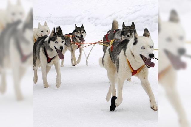 Haftstrafe für Hundetöter in Kanada