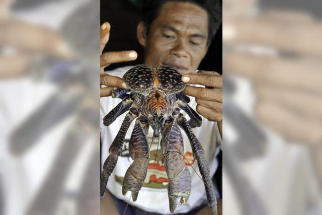 Urlaub auf den Togian Islands: Achtung: Palmendieb!