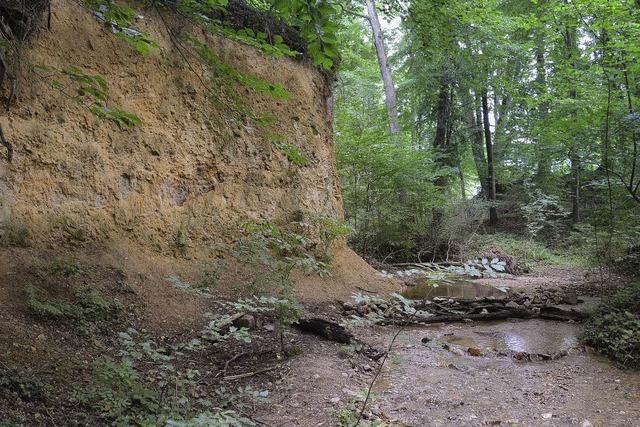 Ahbach bei Norsingen wird Naturdenkmal