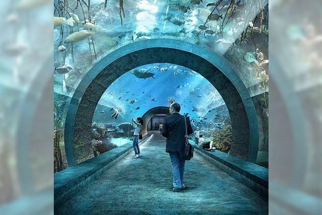 Riesenkraken und Haie in 9 Meter hohen Becken