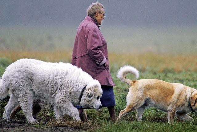 Versuch, die Hundehaltung zu steuern