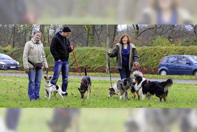 Halter fordern Freiraum für Hunde