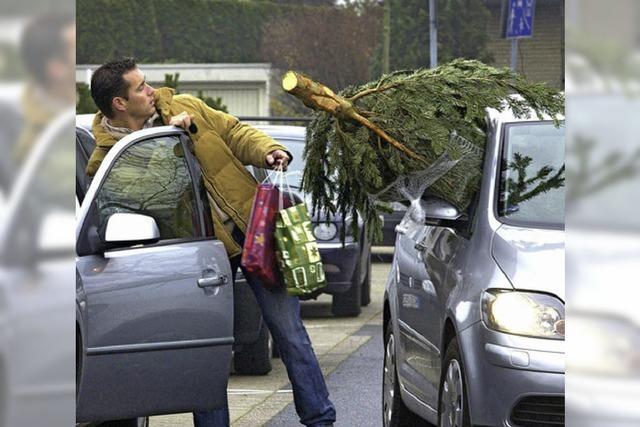 Ein Baum als Beifahrer