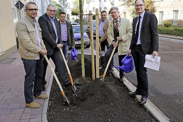 Die Stadt will mehr Straßenbäume