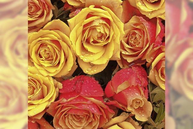 Vorfreude auf den Rosenduftgarten