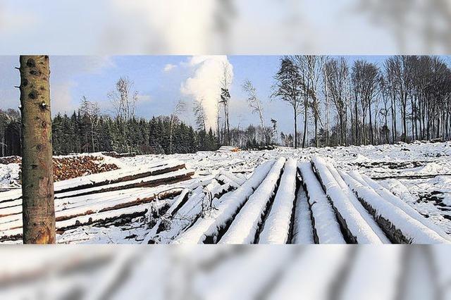 Gemeindewald hat guten Gewinn abgeworfen