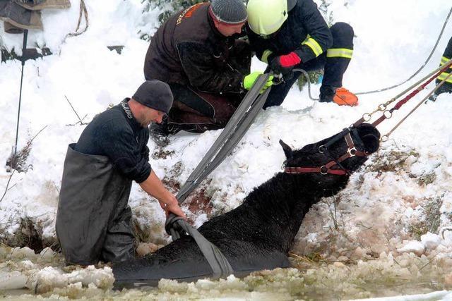 Stute stürzt bei Schneetreiben in Teich – Feuerwehr rückt aus