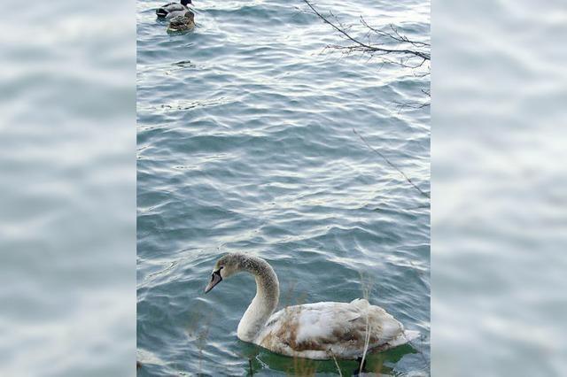 Studie sieht die Gemeinde am Ufer