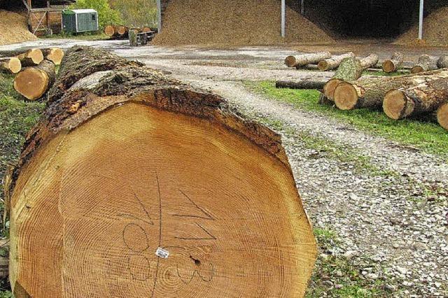 5362 Euro für einen Baumstamm