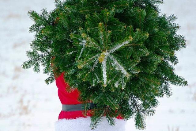 Gibt es den umweltfreundlichen Weihnachtsbaum?