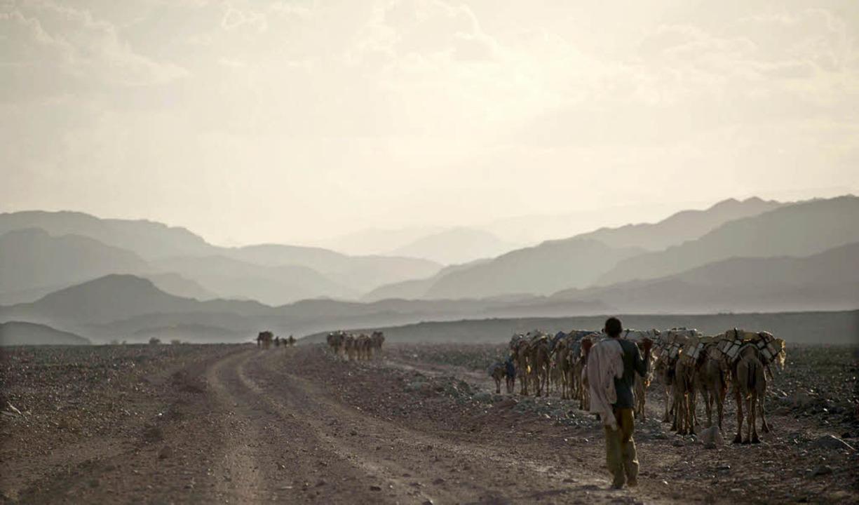 Mit Kamelkarawanen wird das Salz, das ...n wurde, in die Städte transportiert.   | Foto: dpa