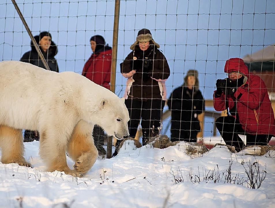 Menschen hinter Gittern: Eisbär frei!  | Foto: Birgit-Cathrin Duval