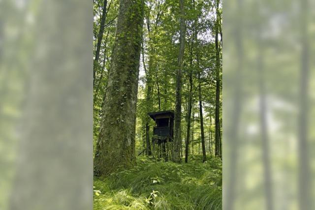 Der Stadtwald als Vorzeige-Objekt
