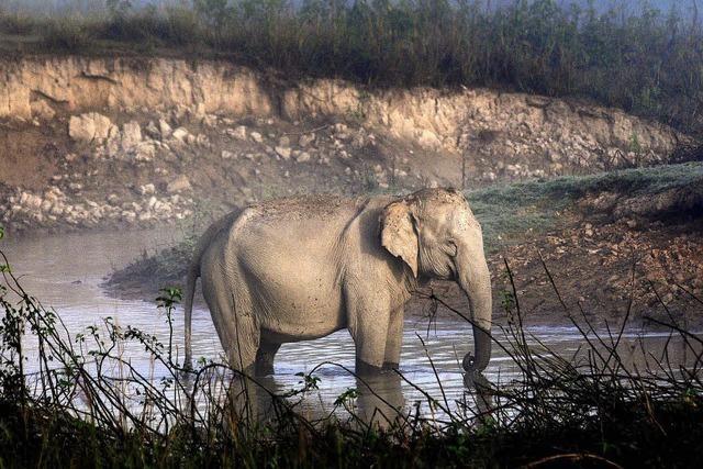 Elefanten greifen Autos an