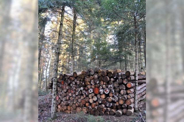 Der Wald schreibt schwarze Zahlen