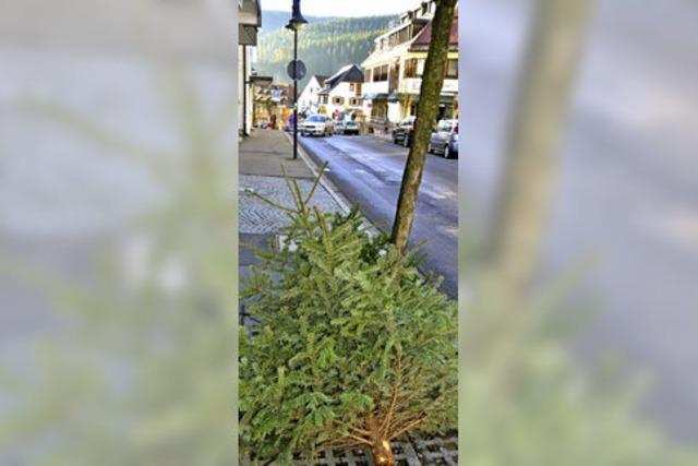 Ein Service für den alten Baum