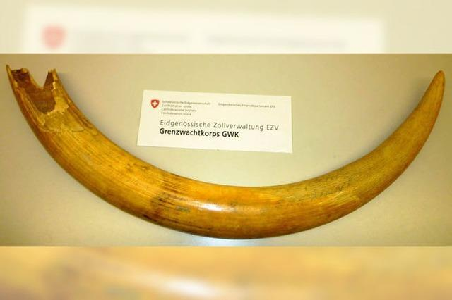 Schweizer Grenzwächter konfiszieren Elefanten-Stoßzahn