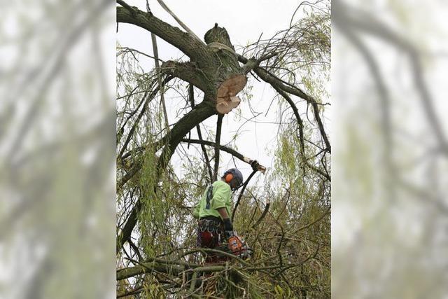 Ein Mann, der an den Bäumen hängt
