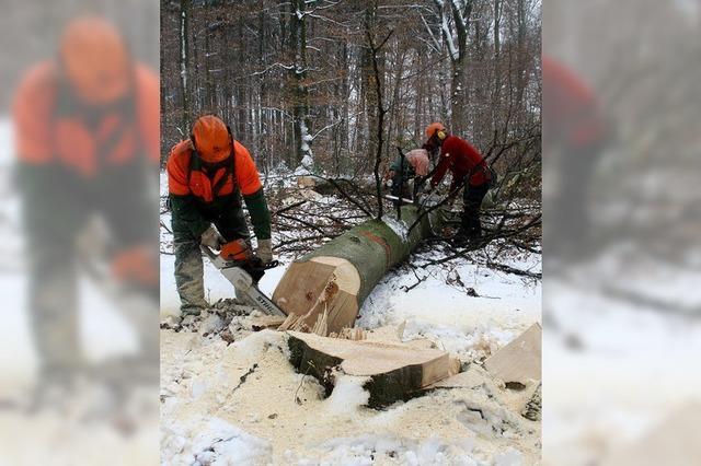 Frust beim Forst: Es fehlt der Frost