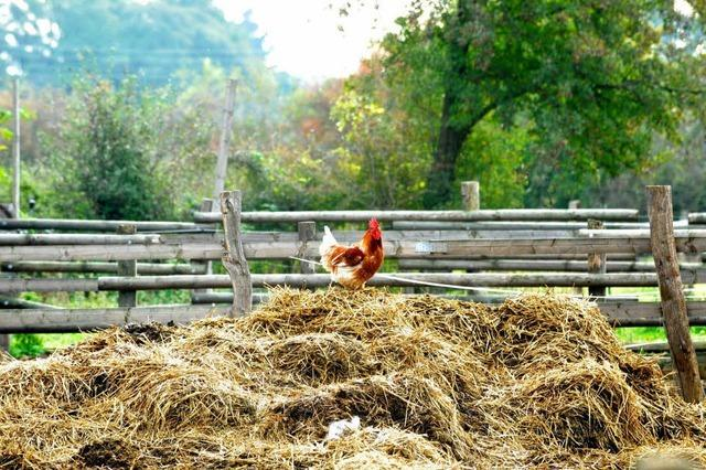 Der Landwirtschaft geht der Nachwuchs aus