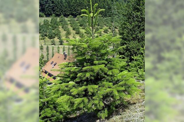 Gefahr der Verwaldung droht nicht