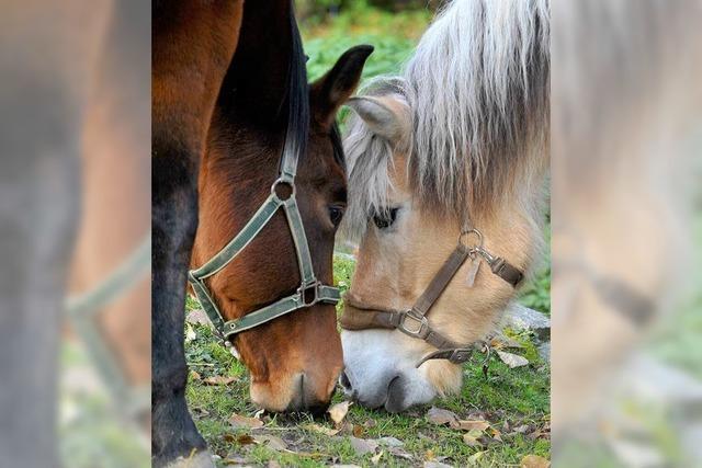 Pferdeschänder: Polizei stellt Ermittlungen ein