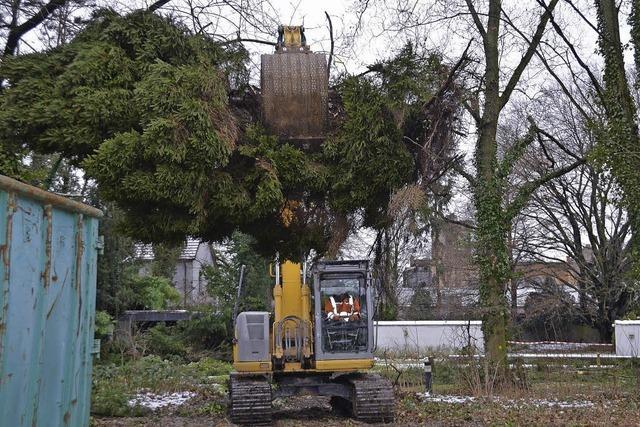 21 Parkbäume fallen