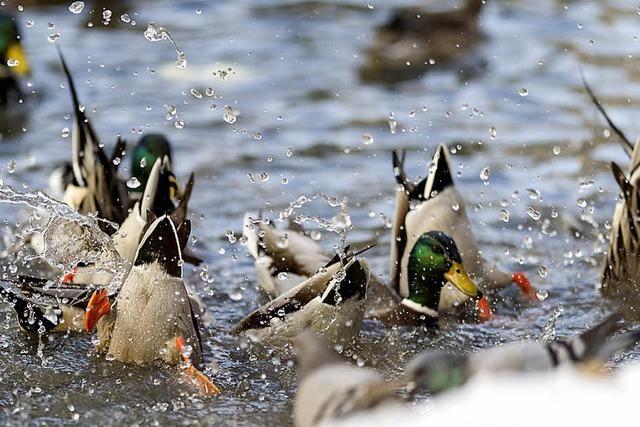 Die Vögel im Basler Zoo lässt die Kälte völlig kalt