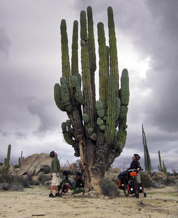 Naturphänomene wie dieser Kaktus laden zum Absteigen ein.  | Foto: ZVG