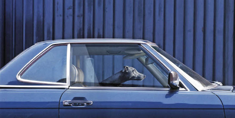 Passt Hund Maus nicht wunderbar in dieses schnittige Auto?   | Foto: Martin Usborne