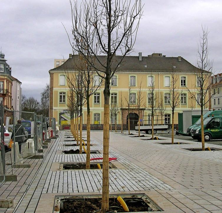 Noch stehen sie nackt da:  66 Linden auf dem Abbatucci-Platz  | Foto: Bartl