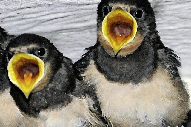 Von Nest -und Häuslebauern