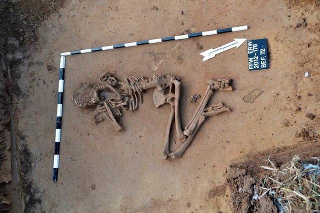 Archäologen stoßen auf 4500 Jahre alte Skelette
