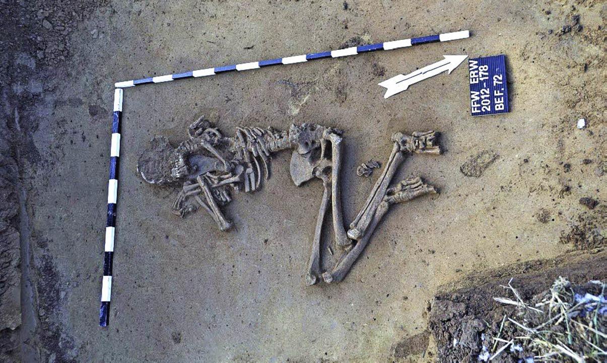 Die Leichname wurden in Hockhaltung be... weitere Grabbeigaben wurden gefunden.  | Foto: Stadt Ettenheim