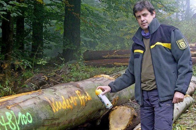 Holz im Vergleich zu Öl günstig