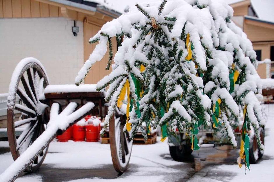 Schmutziger Dunnschtigder Denzlinger  Narrenbaum vor der Lafette noch im Unterdorf (Foto: Cornelius Welsch)
