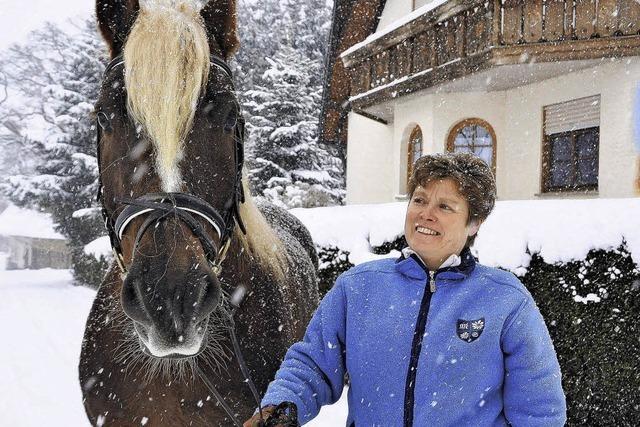 Auch Pferde brauchen zur Fasnetszeit starke Nerven