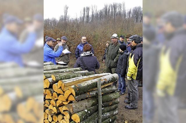 Das Buchenholz wurde gesucht und ersteigert