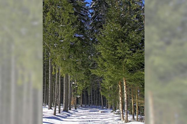 Ein positiver Forstbericht